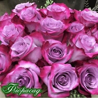 Троянда чайно-гібридна Deep Purple (1 саджанець) опис, характеристики, відгуки