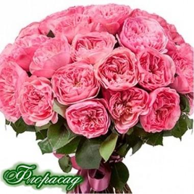Троянда півонієвидна Д. Остіна Pink O'Hara (1 саджанець) опис, характеристики, відгуки