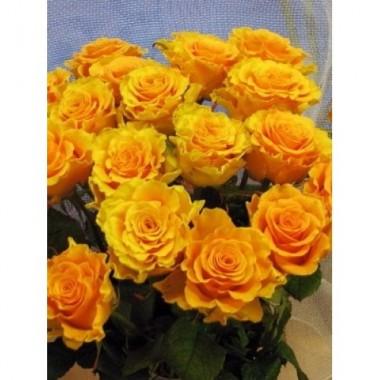 Роза чайно-гибридная Sphinx (1 саженец) описание, отзывы, характеристики