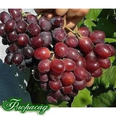 Виноград Эверест (1 саженец) описание, отзывы, характеристики