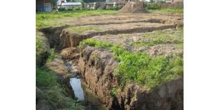 Рослини для ділянки з високим рівнем грунтових вод?