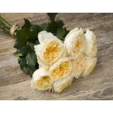 Роза пионовидная Д. Остина Beatrice (1 саженец) описание, отзывы, характеристики