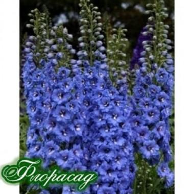 Дельфиниум гибридный Blue Bird (1 растение) описание, отзывы, характеристики