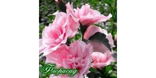 ТОП-5 квітів для зрізання