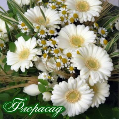 Гербера Джеймсона белая (1 растение в контейнере) описание, отзывы, характеристики