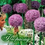 Лук декоративный гигантский Beau Regard (1 луковица) описание, отзывы, характеристики
